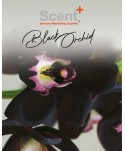 Spray-uri odorizante pentru 20-50 mp - Odorizant de camera spray 250ml ScentPlus - Scentimental Orchid - arli.ro