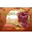 Uleiuri esentiale pentru30 - 5000mp - Odorizant de camera ulei esential 50 ml ScentPlus - Grapes - arli.ro