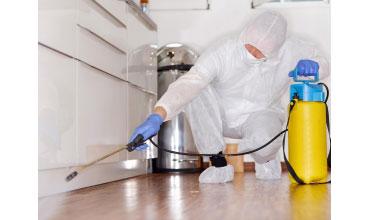 DEZINSECȚIA - Ce trebuie să aibă în vedere orice antreprenor pentru un mediu de lucru curat și igienic!
